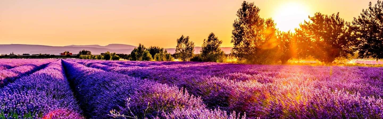 Reiseziel Frankreich Provence